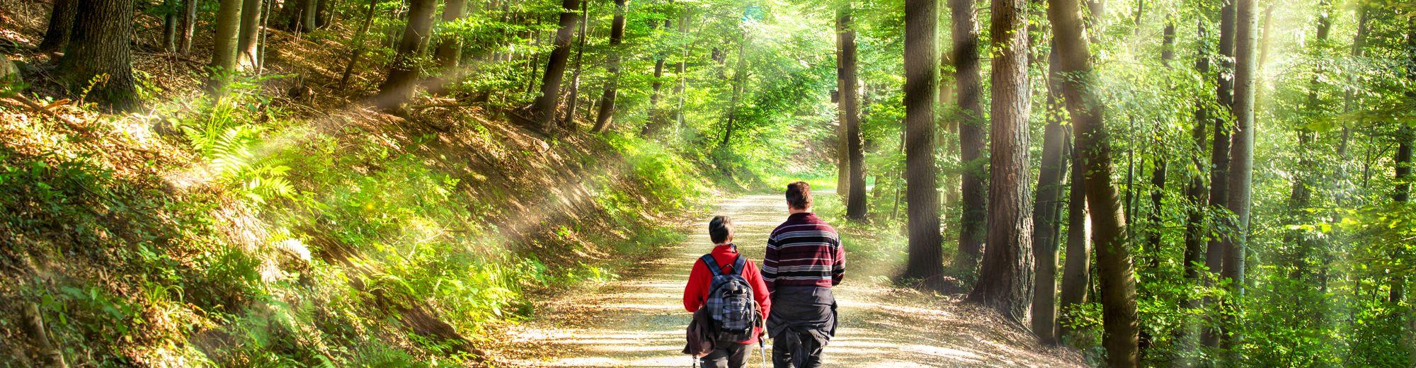 Spaziergang im Wald | © eyetronic - stock.adobe.com
